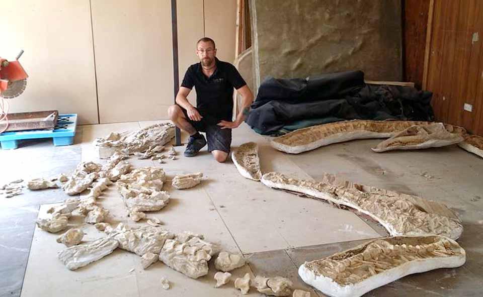 Mosasaur Fossil