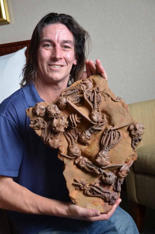 museum quality fossil trilobites