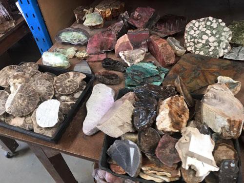 Ammonites , Rhodonite,Pudding stone and rare tree fern